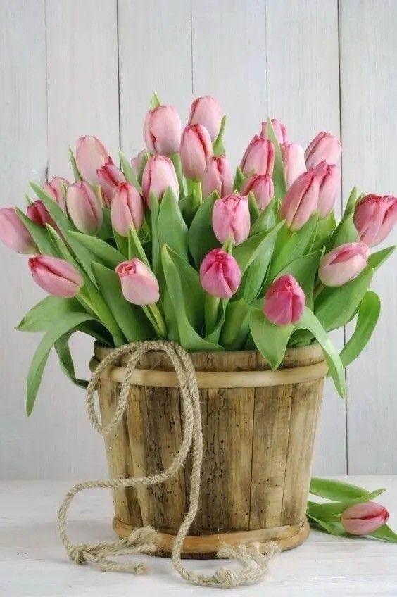Pin di Rosa Greco su Тюльпаны..   Tulipani, Bellissimi ...