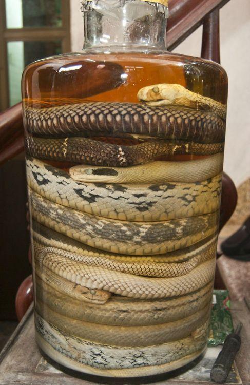 snakes in a bottle