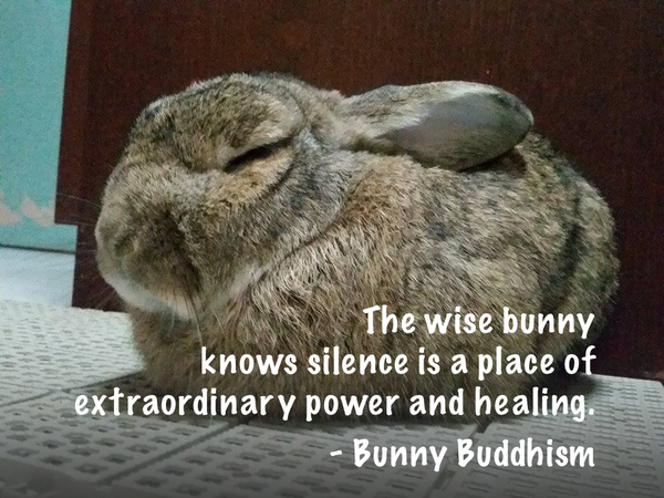 Pin by chup Bo on :) rabbits | Cute baby bunnies, Cute bunny ...