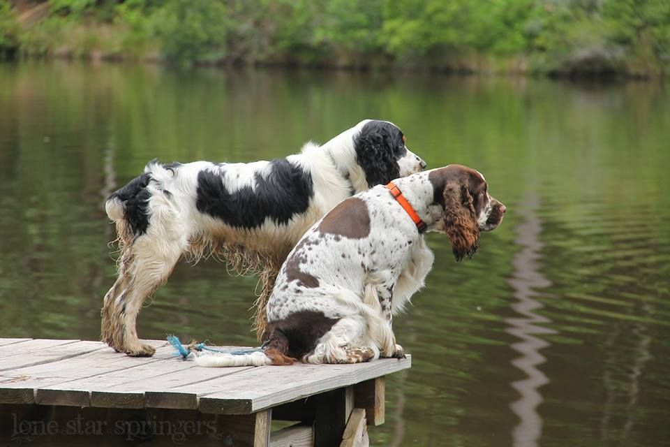 How To Make An Interesting Art Piece Using Tree Branches Ehow Springer Dog Springer Spaniel Spaniel