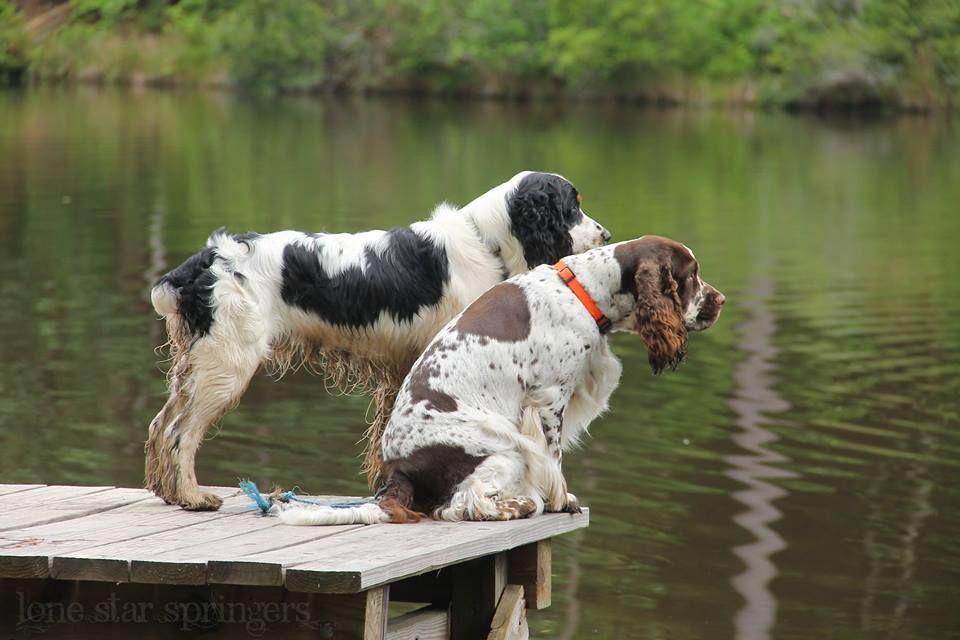 How To Make An Interesting Art Piece Using Tree Branches Ehow Springer Dog Springer Spaniel Dog Breeder