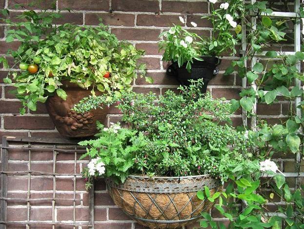 Muurhangers, doet het ook goed op uw balkon met planten kruiden, zelfs met groenten