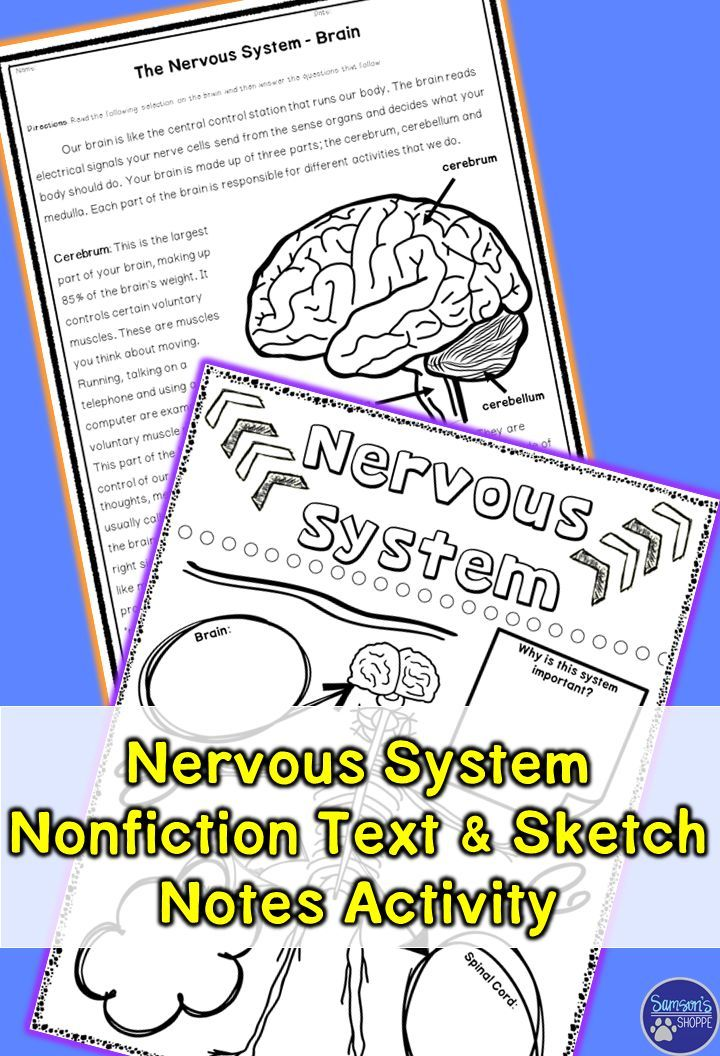 Nervous System Nonfiction Article and Doodle Sketch Note Activity ...