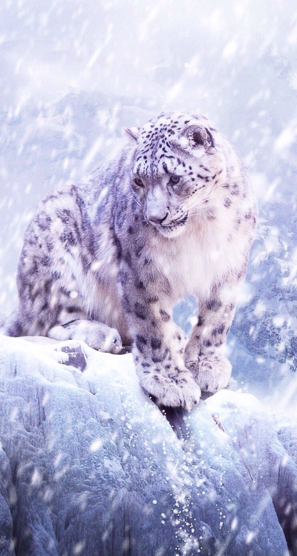 A Clouded Snow Leopard Out in the Blowing Falling Snow