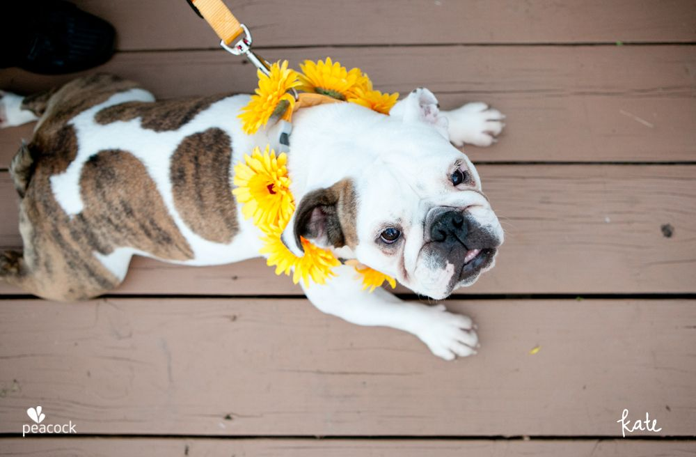wedding: 'flower' dog.