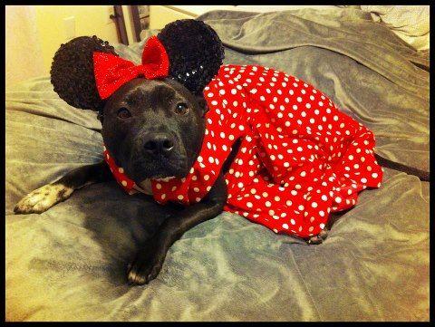 Minnie Mouse Pittie