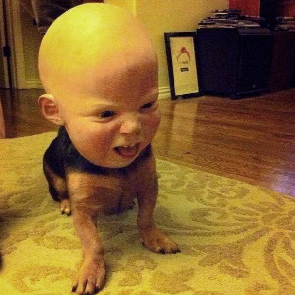 Put a Halloween mask on your dog