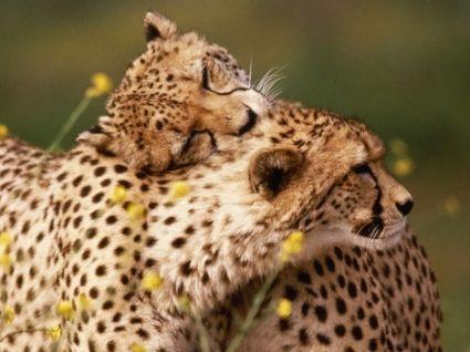 animals wild photos - Cerca con Google