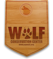 Opposes Nomination Of Cathy Mcmorris Rodgers As Interior Secretary Wolf Conservation Center Red Wolf Mexican Gray Wolf