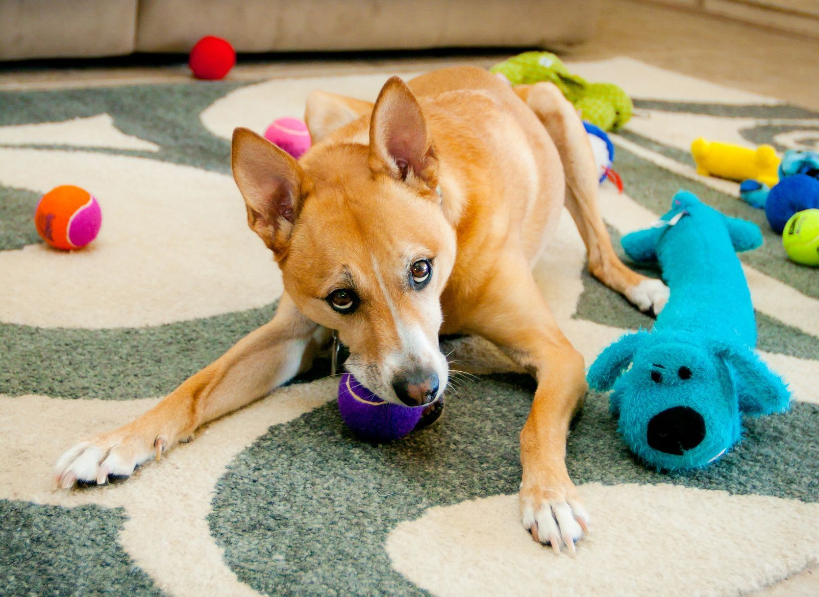 5 Things That Could Endanger Your Pet At Home Hunde Tiere Und Giftig Fur Hunde