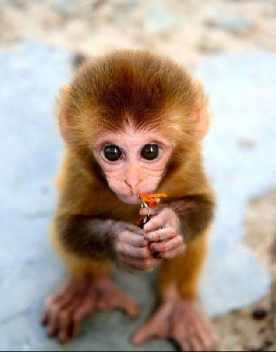 I am not a fan of monkeys or gorillas or things like that (some are cute I am not gonna lie) but when they are babies I want to cuddle with them :)