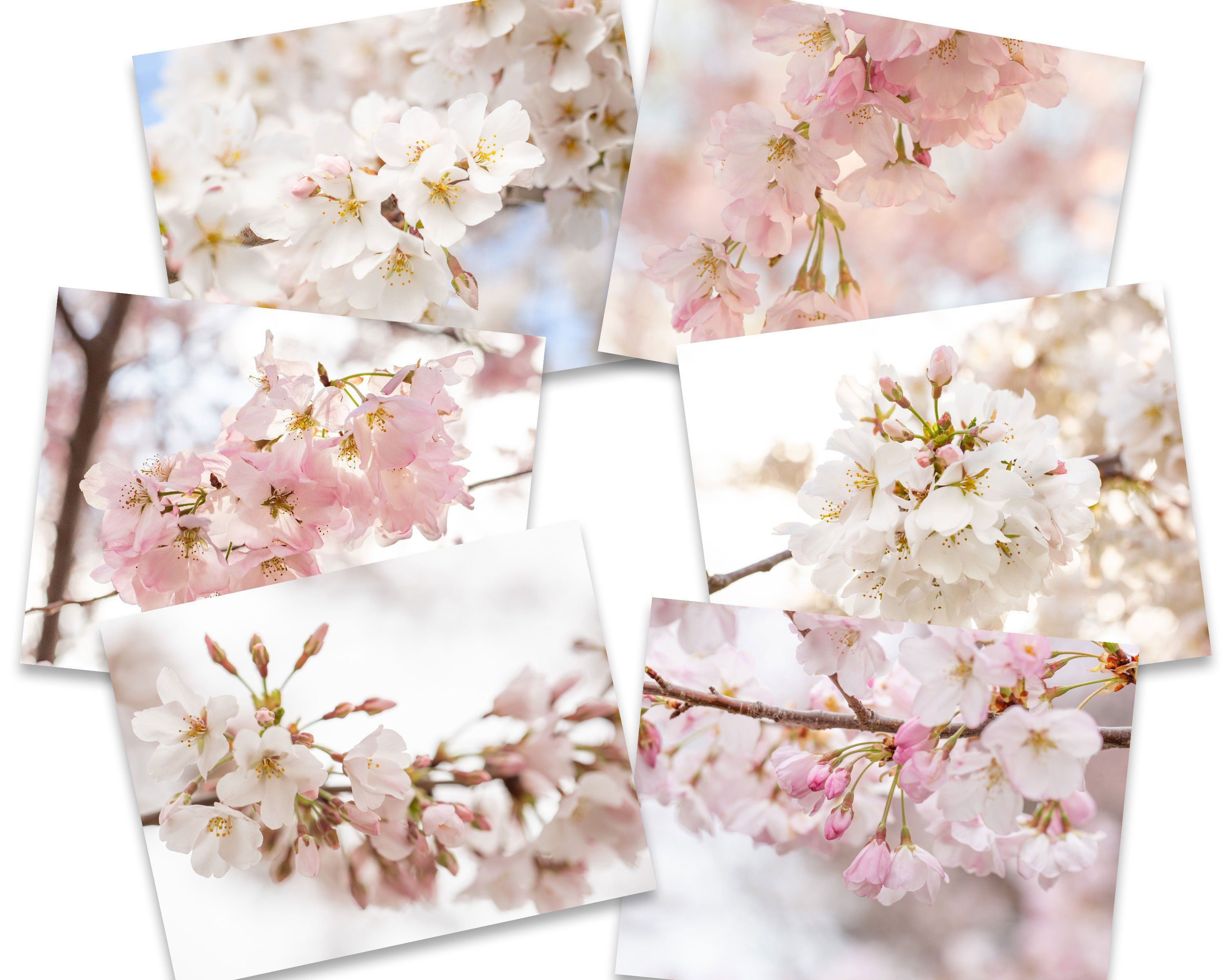 Cherry Blossom Note Cards Set Of 6 Photo Note Card Set Etsy Photo Note Cards Notecard Set Blank Note Cards