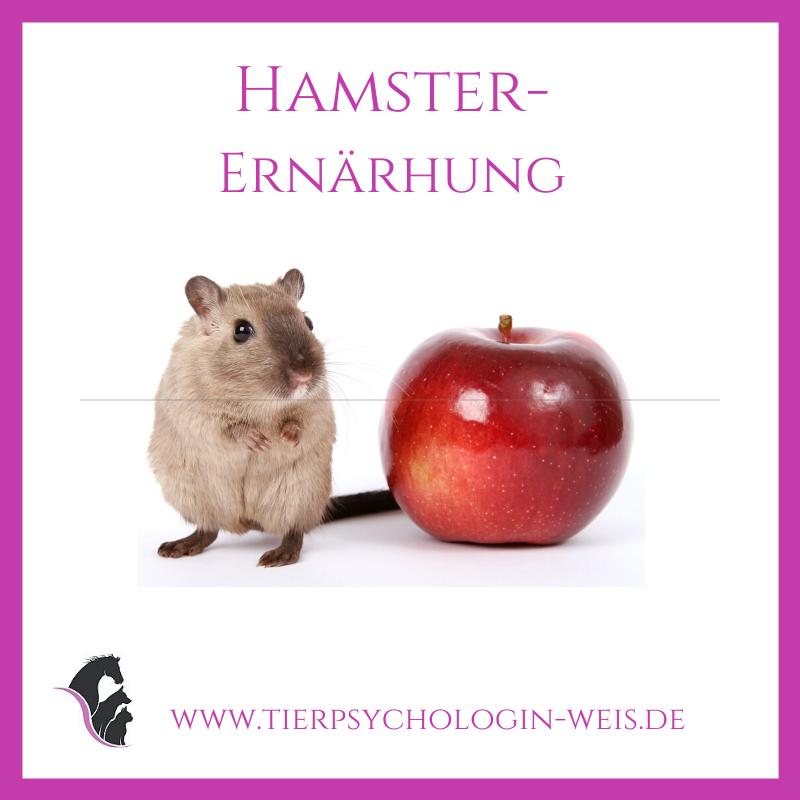 Pin Auf Hamster Ernahrung