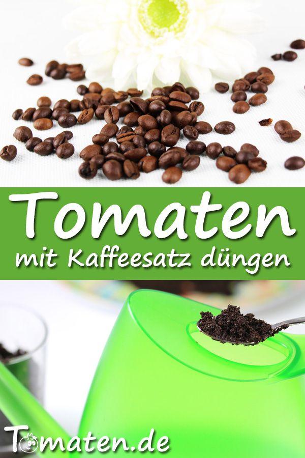 Kaffeesatz Düngen