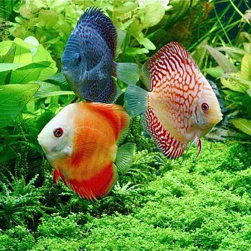 Fotos peces tropicales buscar con google foto peces - Peces tropicales fotos ...