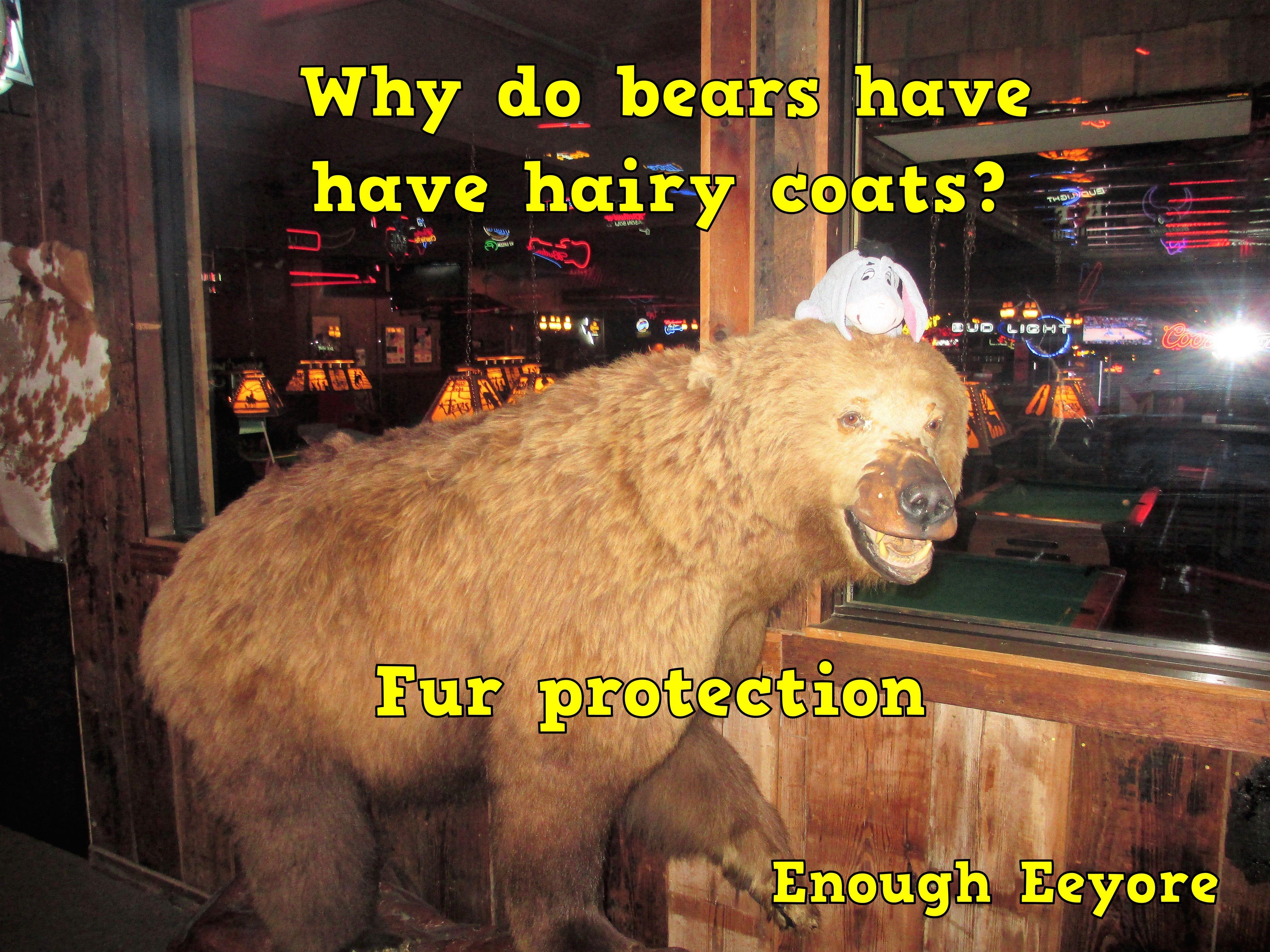 Corny Jokes Humor Why Do Bears Have Hairy Coats Corny Jokes Lunchbox Jokes Corny
