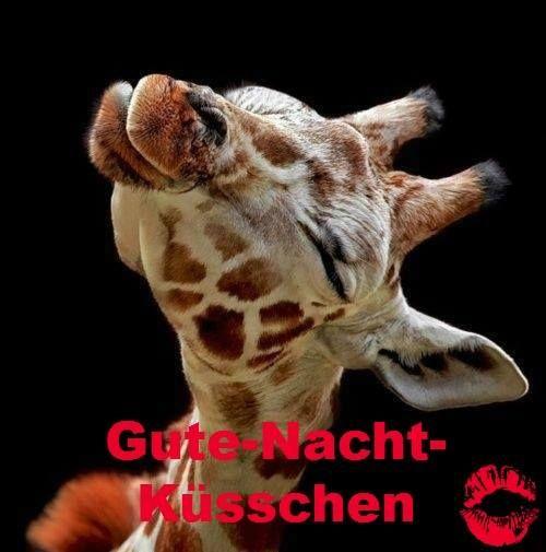 Pin Von Debbie Agnew Auf Animals Cute Baby Animals Cute