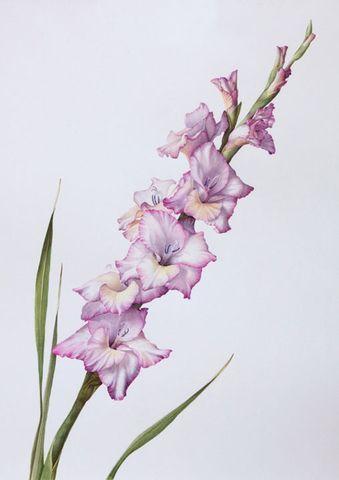 Pin By Abi Salazar On Tattoos Gladiolus Tattoo Gladiolus Flower
