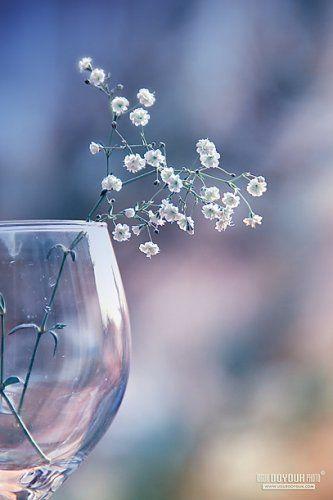 Красивые и нежные картинки от Бэмки! | Фиолетовые фоны, Изображения неба,  Цветы