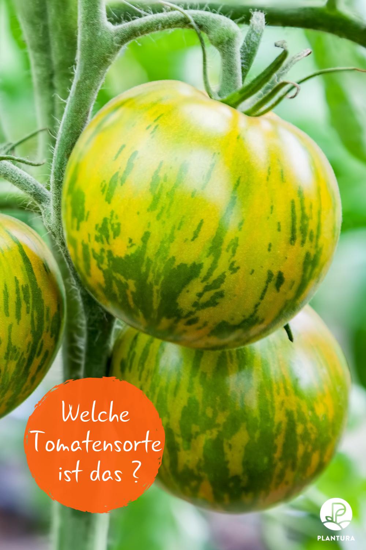 Selbstversorgung Aus Dem Garten Gesundes Obst Und Gemuse Tomaten Pflanzen Garten