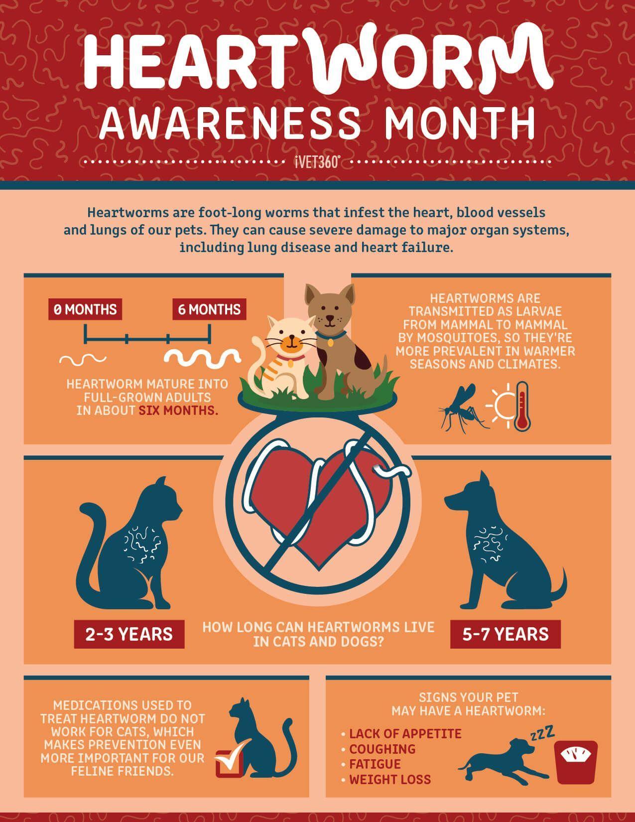 Heartworm Awareness Month Heartworm awareness, Heartworm