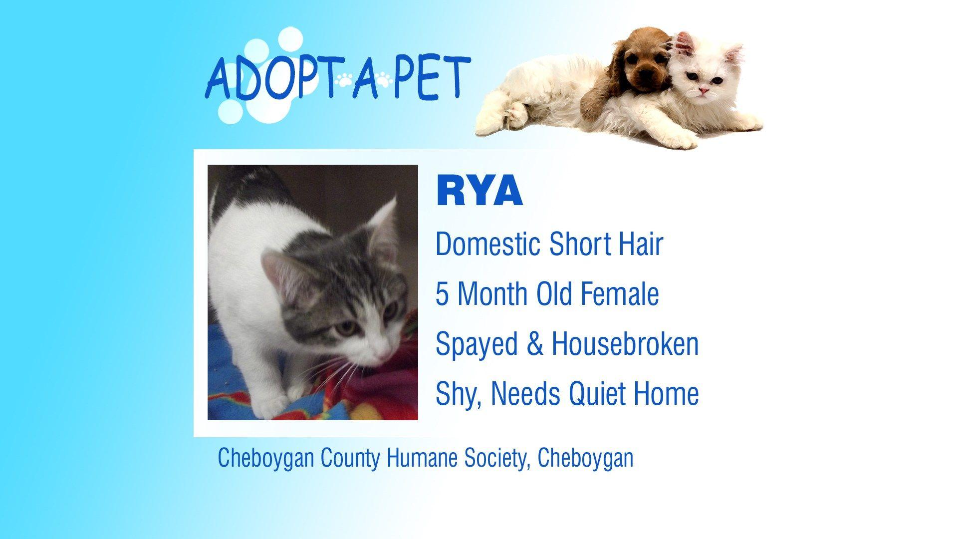 Adopt a Pet Tuesday Chance & Rya Northern Michigan's