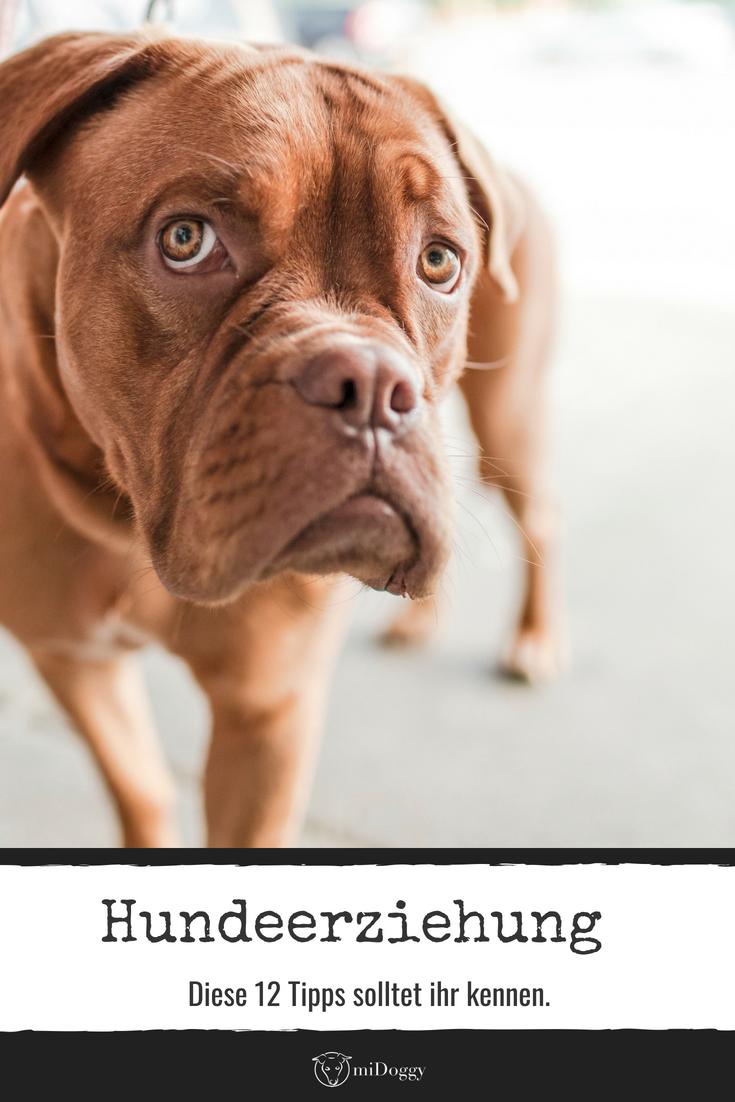12 Regeln Fur Die Hundeerziehung Hunde Alpha Dog Und Hundeerziehung