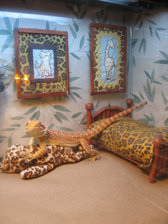 Juvenile bearded dragon complete viv set by for Dragon bedroom ideas