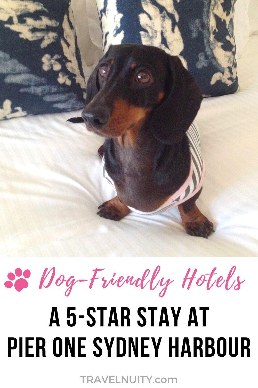 Pin On Dog Travel Australia