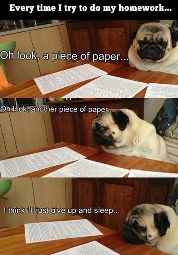 Doing Homework Http Feedingthe Net Doing Homework Funny Humor Funny Pictures
