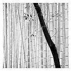 Fine Art photography by alexandre manuel | JAPAN