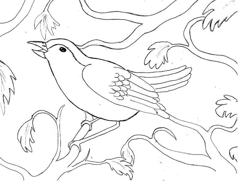 Bird On A Branch Tree Coloring Page Tree Pinterest