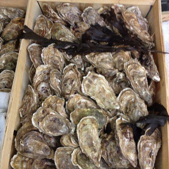 Oysters At The Fish Market In Normandy Only Place That Makes Fresh Fish Smell Good Huitres Appetit Normandie