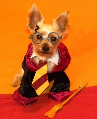 10 Cute Pet Costumes Pet Halloween Costumes Pet Costumes Cute