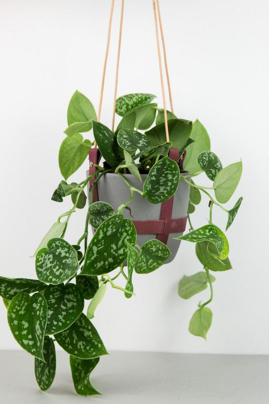 Trailing Plants Indoor Hanging Planter Trend Guide ...