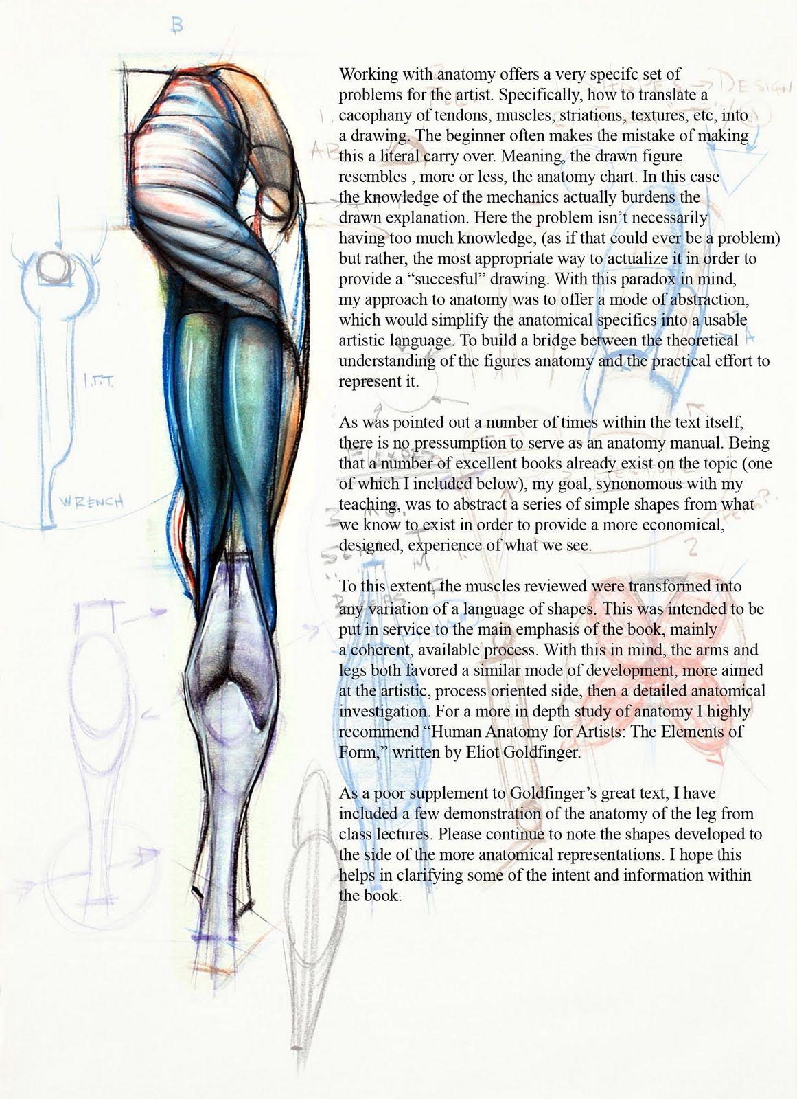 Human Leg Back Anatomy Anatomy Pinterest