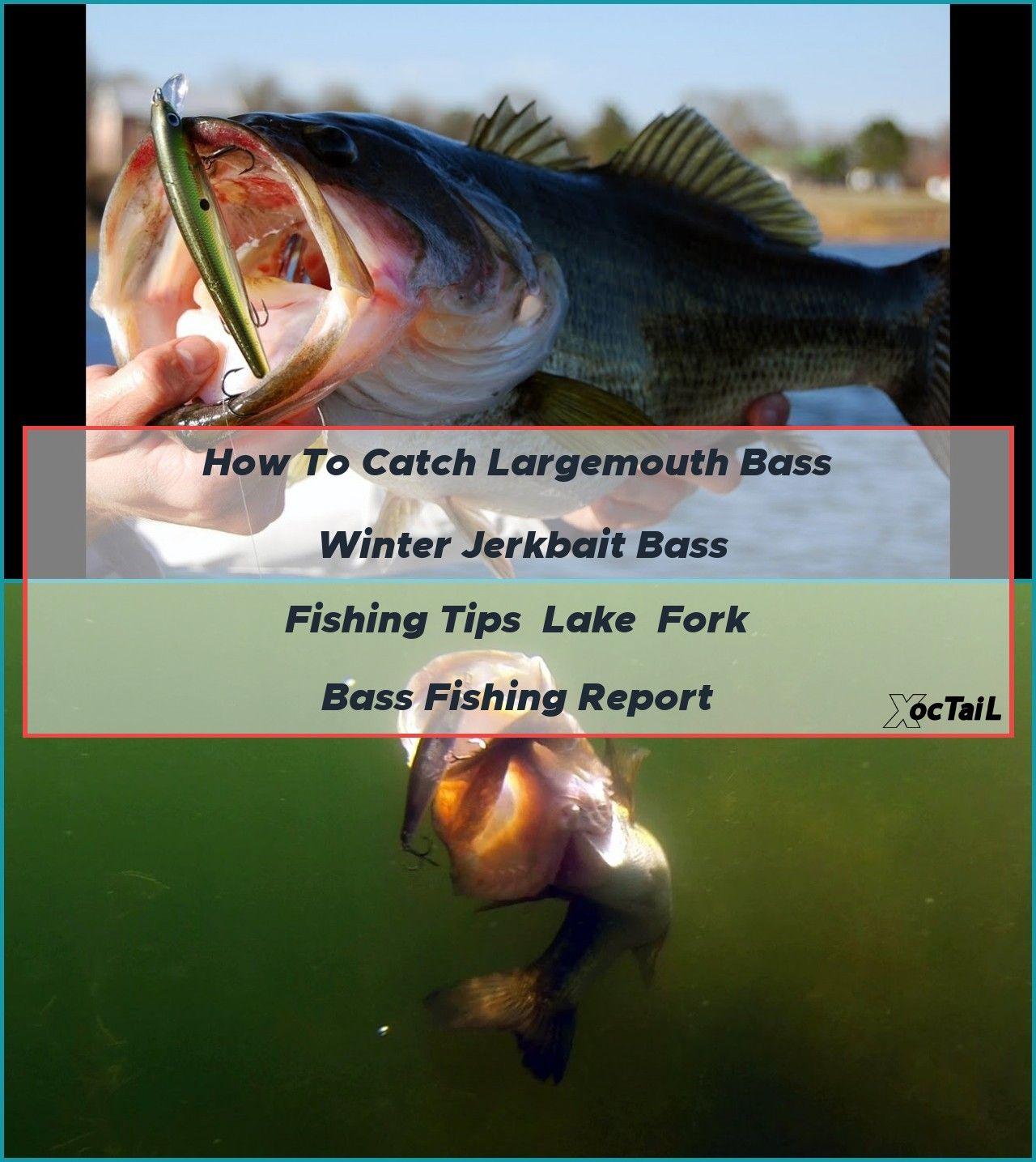 How to Catch Largemouth Bass Winter Jerkbait Bass Fishing