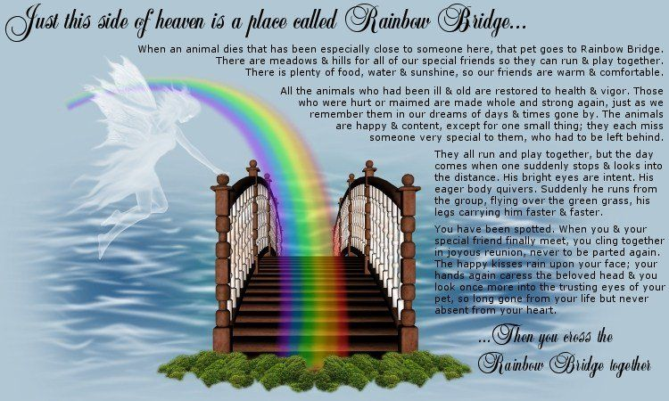 Pet Loss Poems Animal Picture S In Heaven Rainbow Bridge Poem