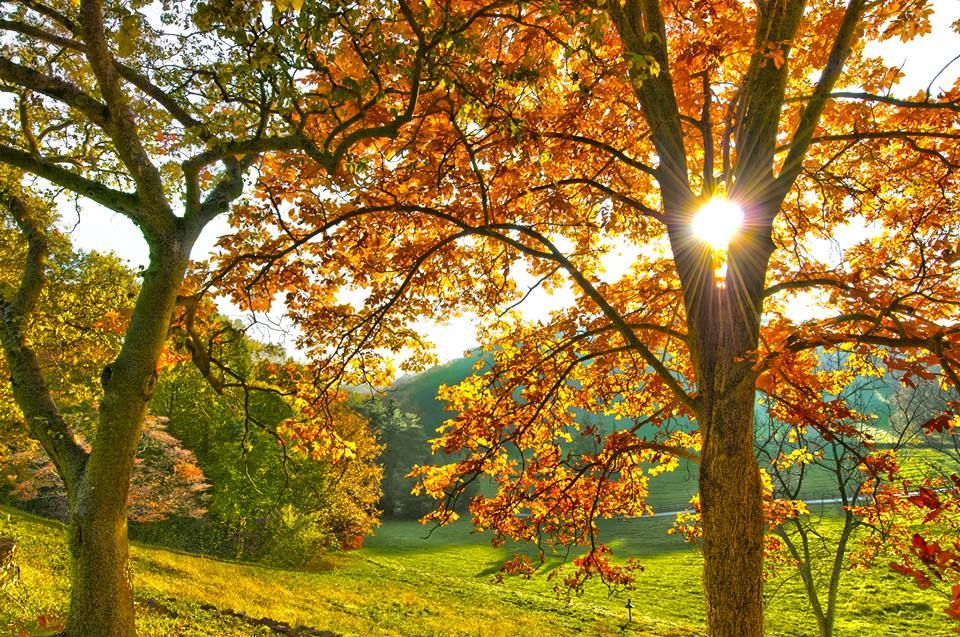 Pin by Diana Carlier on fall gardens | Fun fall activities ...