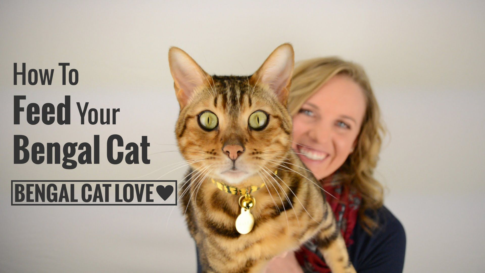 How to Feed Your Bengal Cat (Covering Raw Diet, Prey Model