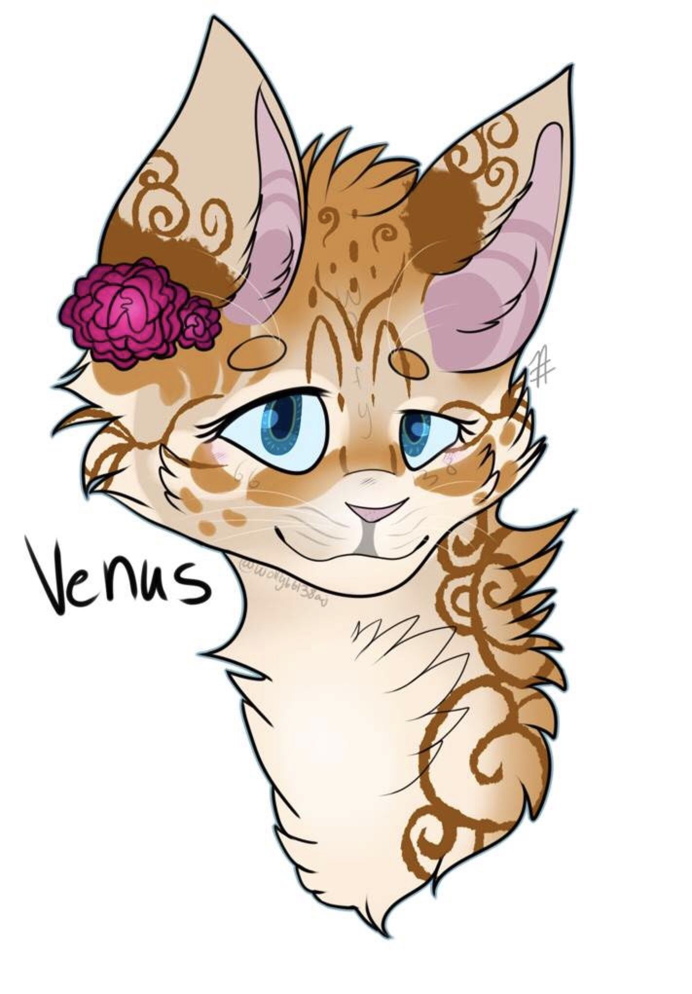 Venus10 moonsFemaleArt by ForestHeart on Warriors Amino
