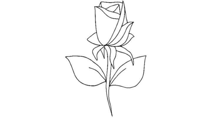Comment dessiner une belle fleur facilement apprendre dessiner comment dessiner comment - Belle fleur a dessiner ...