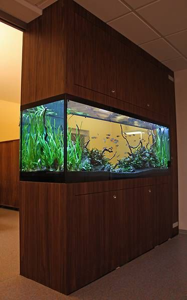 A partition tank lets you see it from 3 sides dream fish tanks pinterest aquariums fish - Fish tank partition wall ...