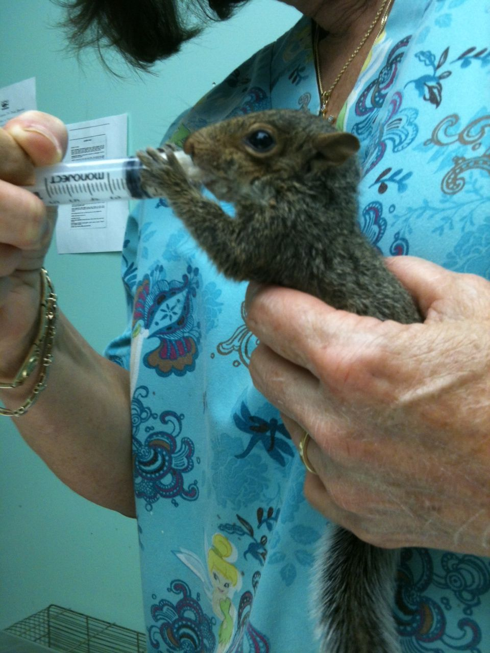 15++ Town east animal hospital images