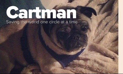 Cartman Pug Photos Pugs First World