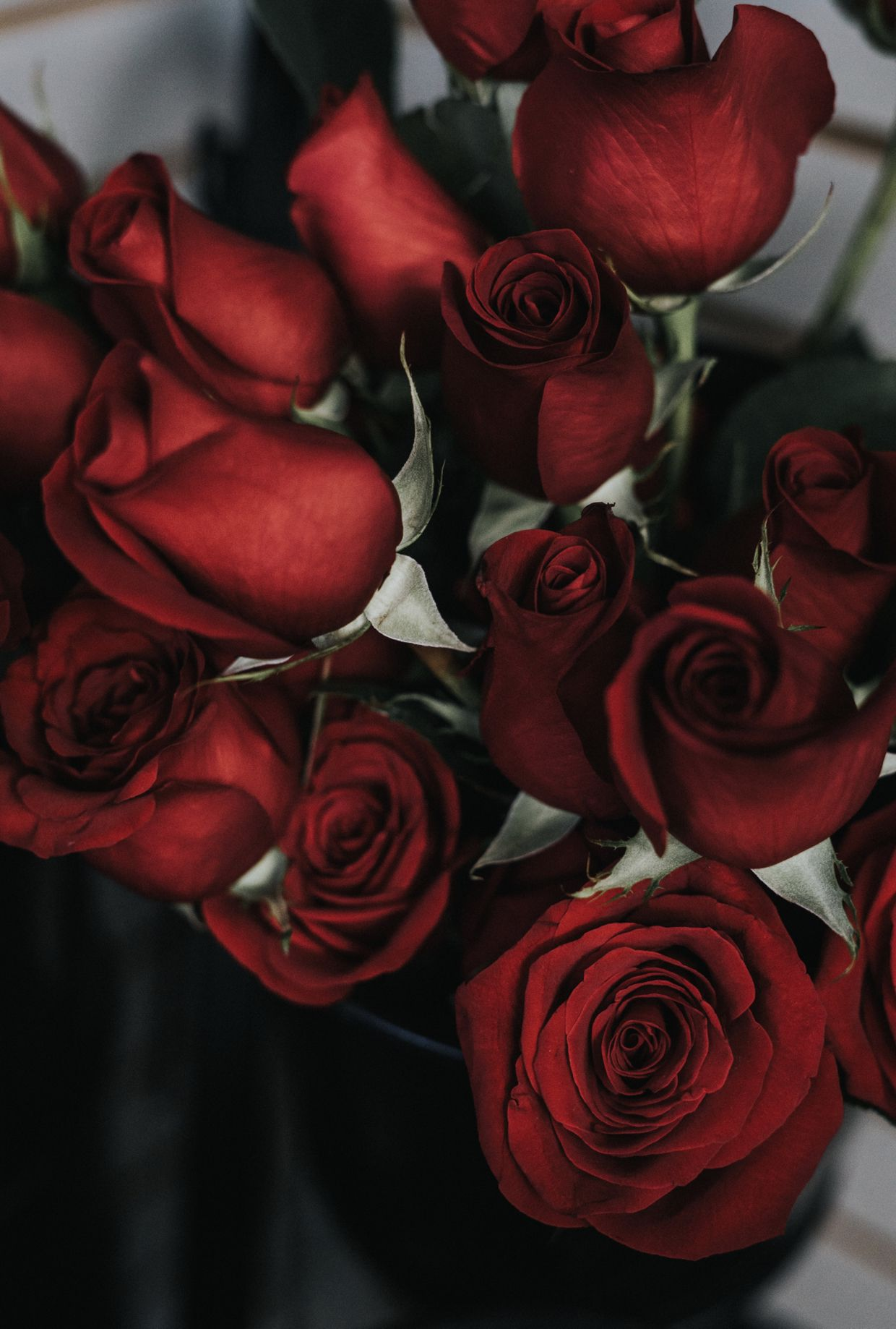 Luxury Roses in a Box, Box of Roses Delivery, Luxury