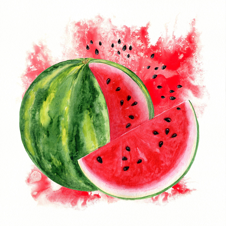 Watermelon Watercolor Clipart Summer Clip Art Sublimation Design