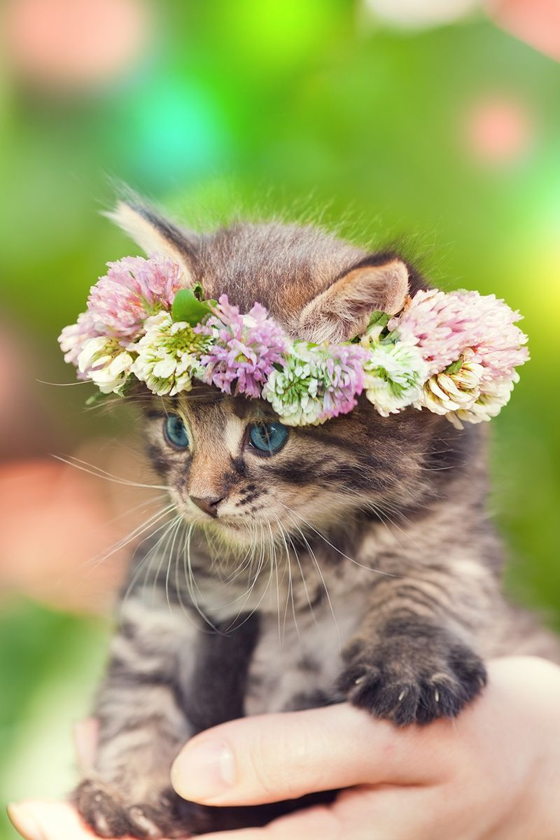 12 Cute Cats Pictures For You To Make This Day Better Cute Cats Photos Cute Dog Wallpaper Cute Dogs