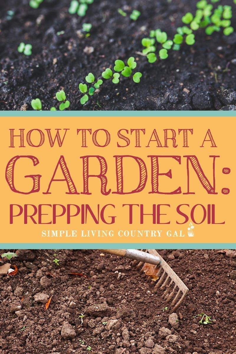 The Steps You Need To Take Before You Plant Your Garden This Season Organic Gardening Tips Starting A Garden Garden Soil