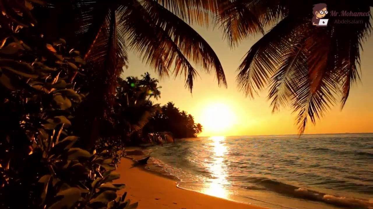 دعاء صلاة التهجد الشيخ عبد الله ليلة 22 رمضان 1437 2016 مسجد عمر بن الخطاب Sunset Tropical Landscaping Sunset Silhouette